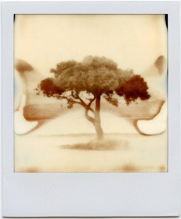 8-PolaroidDreams-004