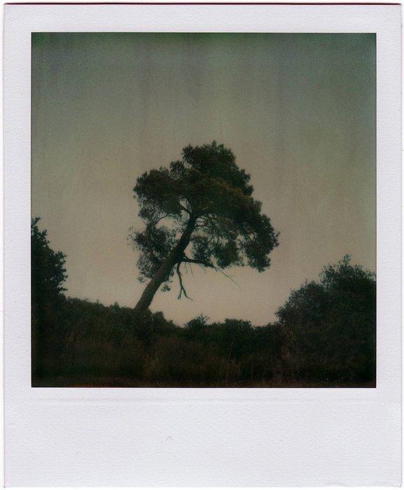 8-PolaroidDreams-005