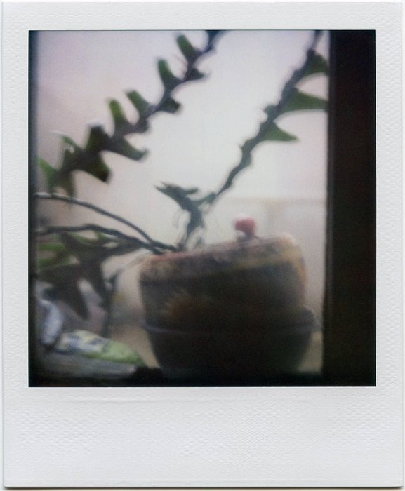 8-PolaroidDreams-007