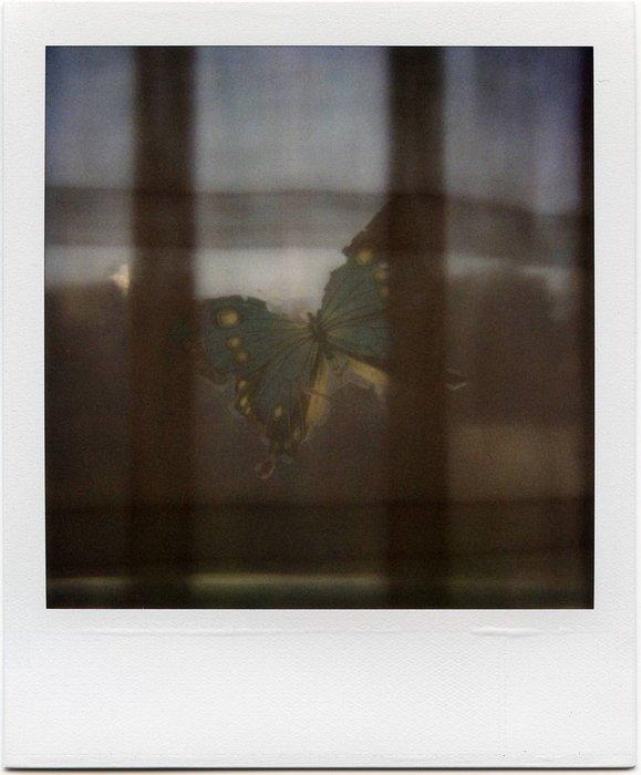 8-PolaroidDreams-024